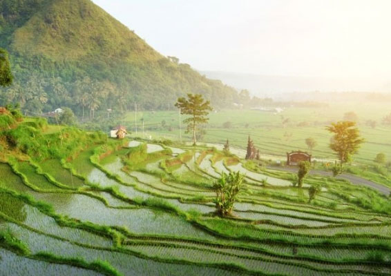 Mindwellness Bali